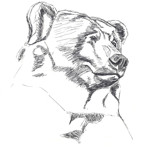 Bear Head Sketch (large view)