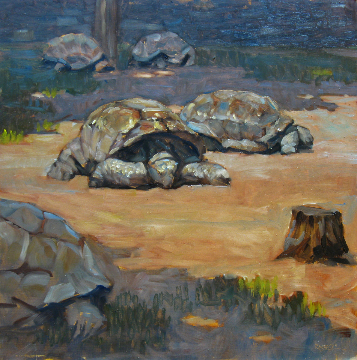 Tortoises (large view)