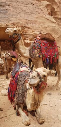 Camel Dudes