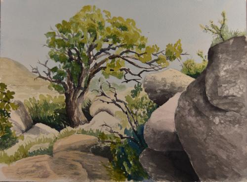 Juniper Tree, Elden Mountain