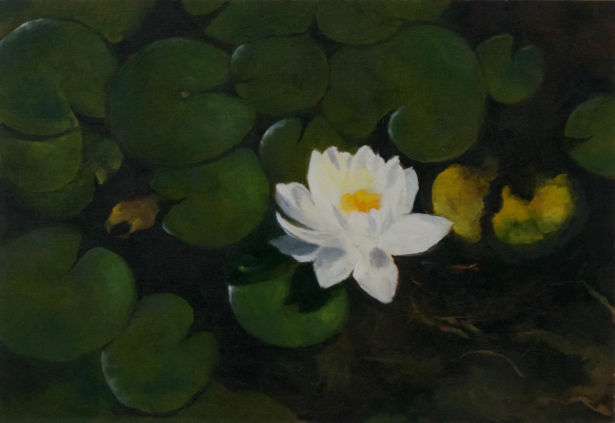 Wild Water Lily (large view)
