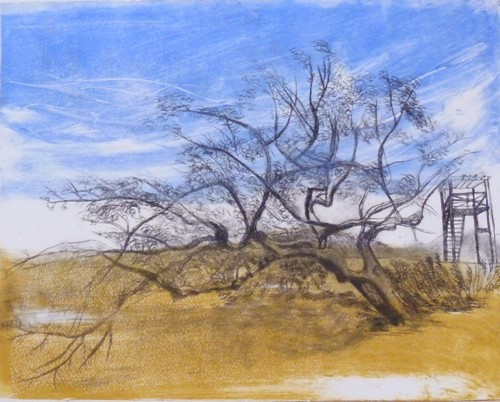 Beach Tree 1