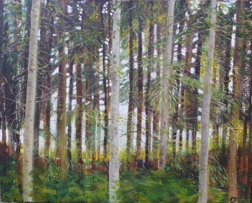 Light Through Trees Auvergne