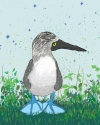 Byron the Blue Footed Booby (thumbnail)