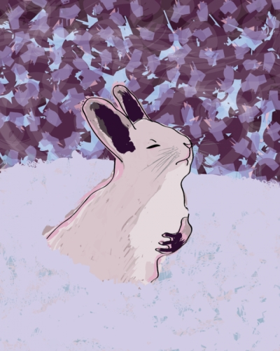 Drawing--AnimalsSadie the Snow Bunny