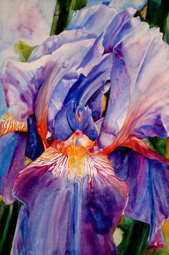 Blue Iris, April