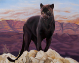 Pink Moment Panther (thumbnail)
