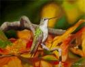 Autumn Hum (thumbnail)