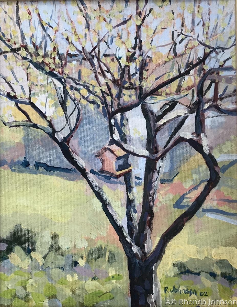 Apple Tree  (large view)