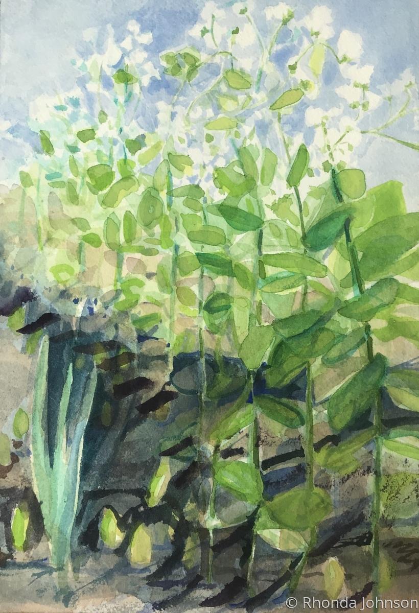 Peas in June (large view)