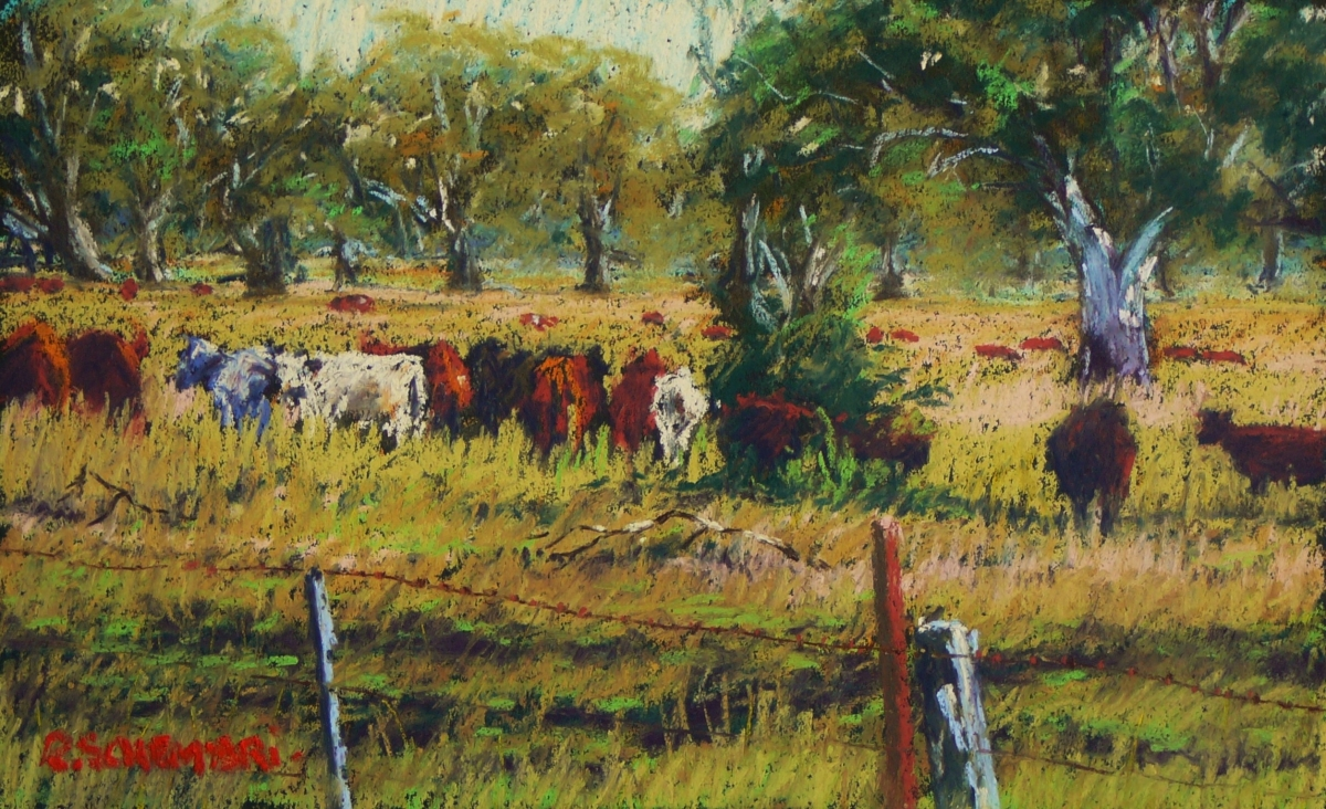 """Beef cattle - Victoria Valley"" (large view)"