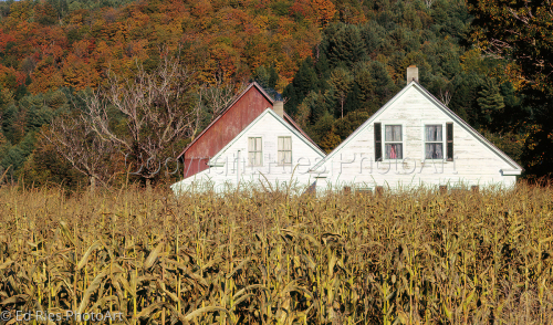 Corn Row House