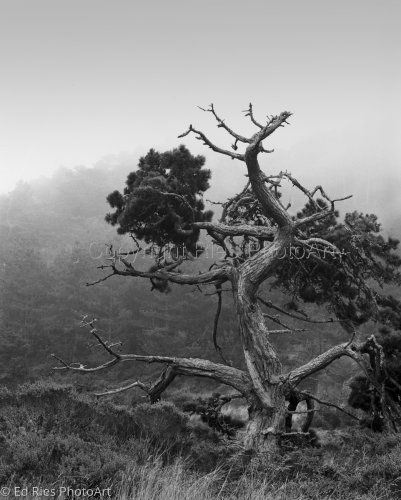 Pt Reyes Fog