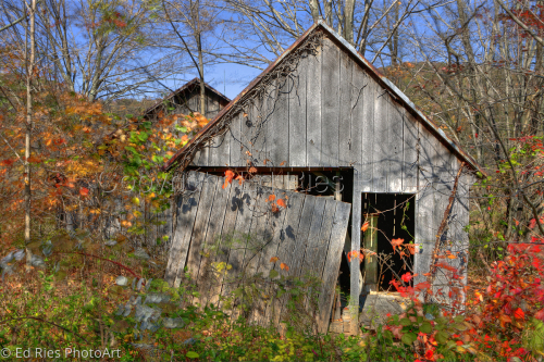 Shed in Fall Clothing