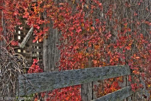 Fence and Fall Leaves