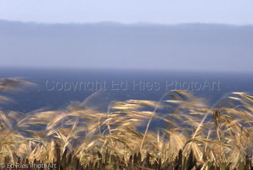 Wind, Sea and Fog
