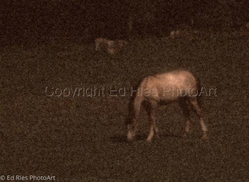Wild Horse Dream