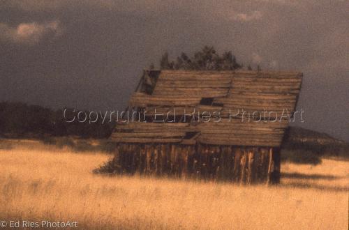 Prairie Dream