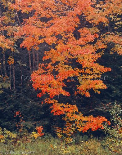 Fall Fire Tree