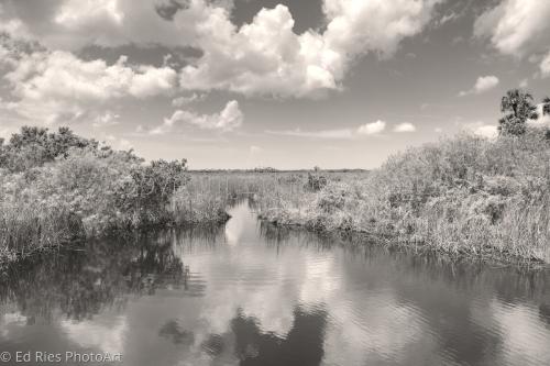 Florida marsh