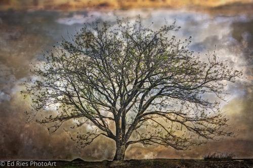 The Leprechaun Tree