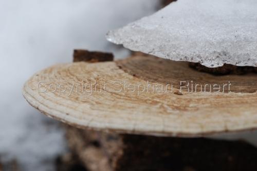 Iced Mushroom