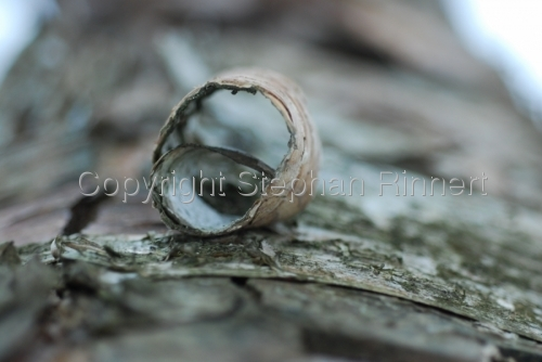 Ring of Bark