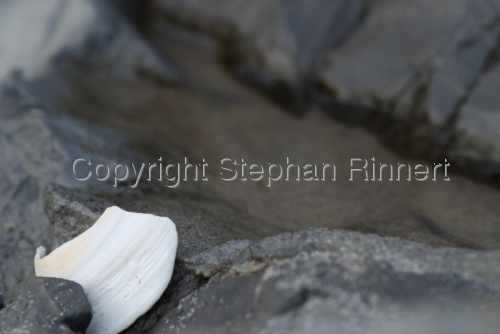 A Shell Clamped Between Rocks
