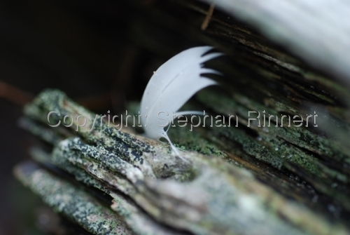 Feather Caught on Wood