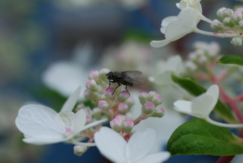 Peaceful Fly