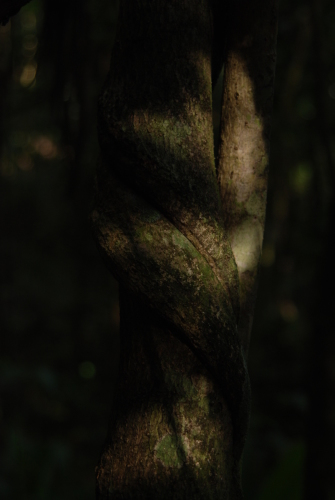Scarred Tree