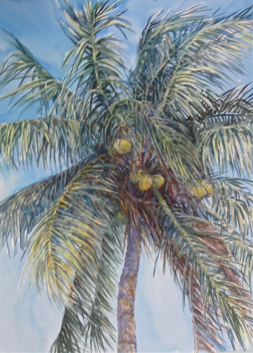 Coconut palm @ Selby Gardens, Sarasota (large view)