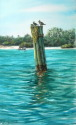 gulls on pilings in the pass (thumbnail)