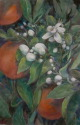 oranges w/ blossoms (thumbnail)