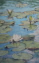 3 lotus in varying degrees of blossom w/ reflections (thumbnail)