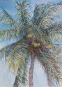 Coconut palm @ Selby Gardens, Sarasota (thumbnail)