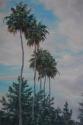 Tall palm trees in a row (thumbnail)