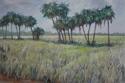 Myakka prairie (thumbnail)