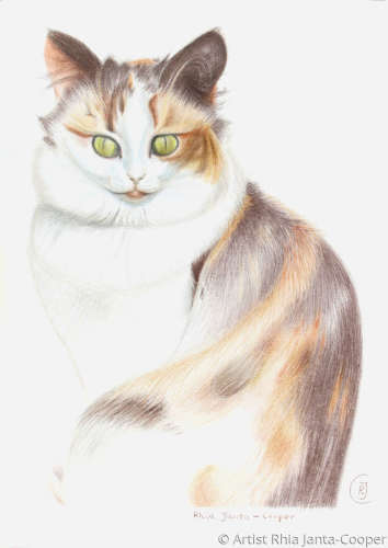 Pencil Drawing of a calico cat