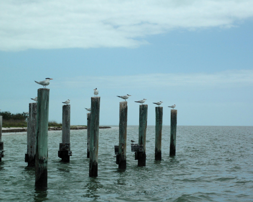 Florida Birds on post