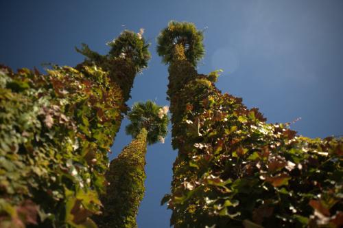 Sherman Oaks Palms
