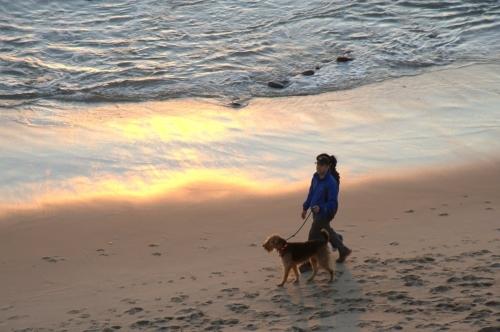 Dog walking sunset