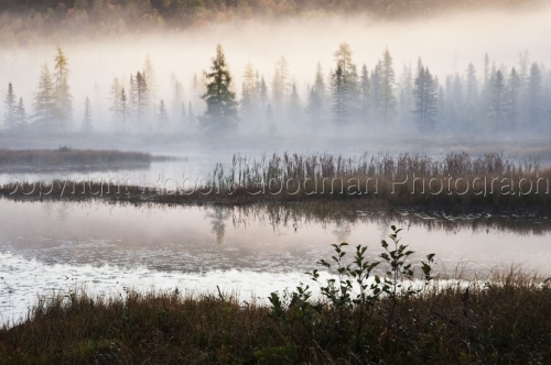 Algonquin Foggy Morning