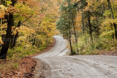 Fall winding road