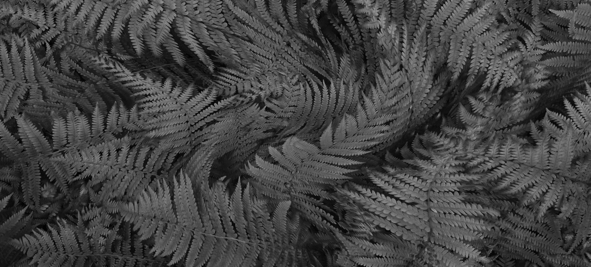 FERNS (large view)