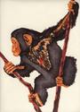 Chimp (thumbnail)