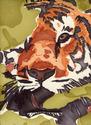 tiger (thumbnail)