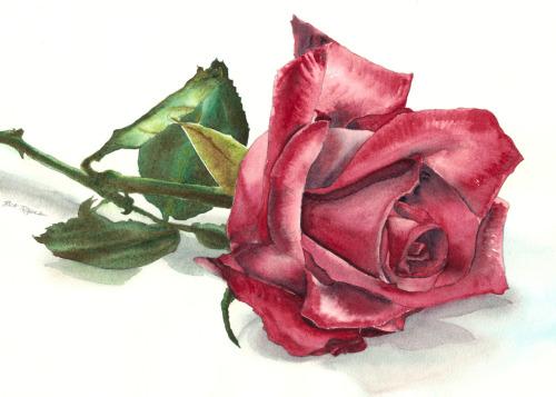 Rita's Rose