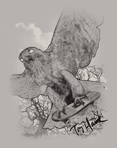 Diagonal Hawk Sketch