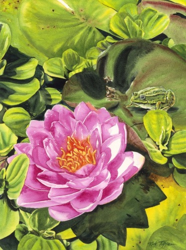 Lily Pads With Frog